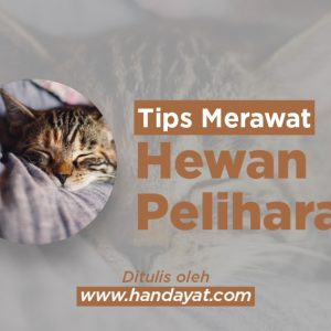 Tips Merawat Hewan